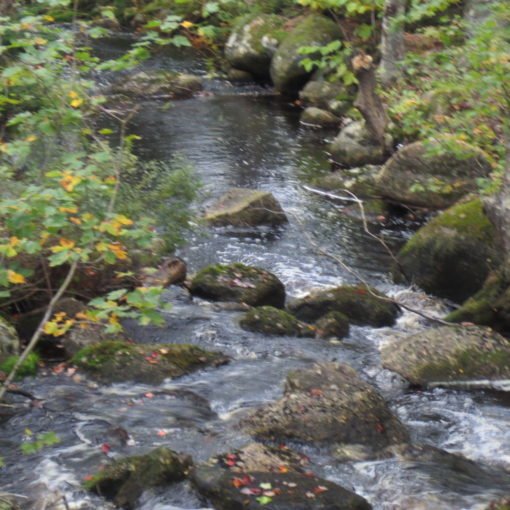 Natural Healthy Water